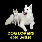shoutout from dog_lovers0 influencer on Instagram