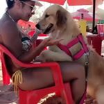 pet.awesome posts on Instagram