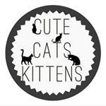 shoutout from cutecatskittens influencer on Instagram