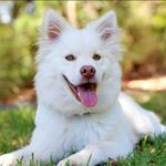 shoutout from dogstified influencer on Instagram