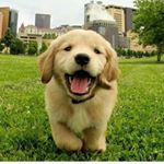 shoutout from puppies_of_lnstagram influencer on Instagram