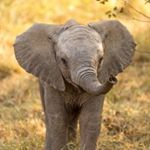 shoutout from elephant.lover.s influencer on Instagram