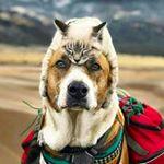 shoutout from love_animalsgram influencer on Instagram