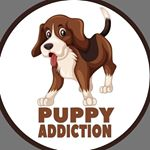 shoutout from puppy.addiction influencer on Instagram