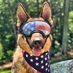 shoutout from germanshepherd24 influencer on Instagram