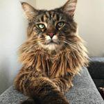 shoutout from lancelot.tomcat influencer on Instagram