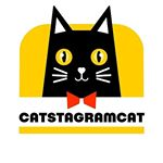 shoutout from catstagramcat influencer on Instagram