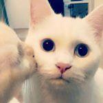 shoutout from dearrcat influencer on Instagram
