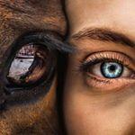 shoutout from horsecaremom influencer on Instagram