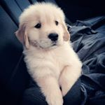 shoutout from puppy.lovrs influencer on Instagram