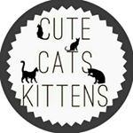 shoutout from cutecatskittens influencer