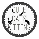 shoutout from cutecatskittens influencer on Instagram